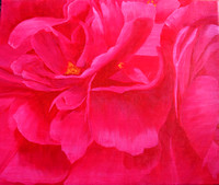 AVAILABLE $200. Peony. 20 x 24 Stretched canvas